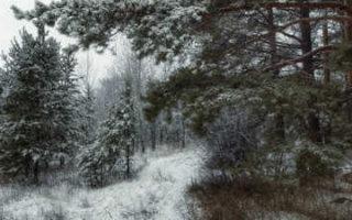 Область накроет метель и туман, возможен мокрый снег