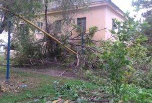 В Пугачеве дерево повредило газовую трубу