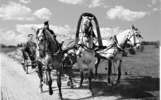 ЧИНОВНИКАМ НРАВИЛОСЬ ЕЗДИТЬ ЗА КАЗЕННЫЙ СЧЕТ