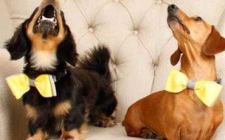 СерпомПо: Мечта народа о собачьей жизни
