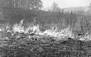 Поджоги травы становятся причиной  лесных пожаров