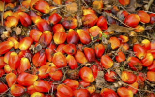 Россия увеличила импорт пальмового масла