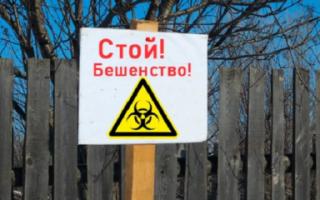 Карантин в Давыдовке