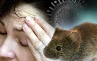 """Жителей области предупредили о новой вспышке """"мышиной лихорадки"""""""