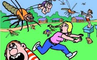Как бороться с комарами на даче
