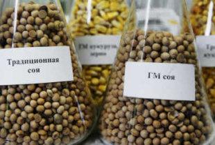 Вредители или дураки? ГМО продукция пойдет в Россию по упрощенной схеме