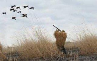 Изменились правила охоты