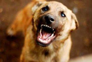 В Пугачевском районе установлен карантин из-за бешеной собаки