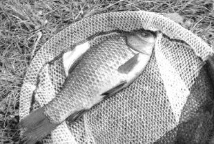 Рыбы всякие нужны,  рыбы всякие важны