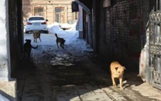 В Госдуме предлагают запретить систему отлова, стерилизации и выпуска бездомных животных