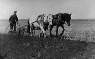 Крестьянский вопрос Николаевского уезда
