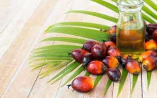 В область ввезли больше пальмового масла, чем в 82 региона страны вместе взятые