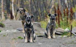 В Госдуме обсудили налог на собак