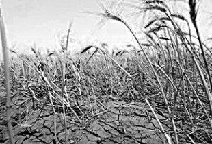 Засухи в Заволжье