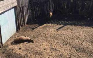 Пугачевская межрайпрокуратура начала проверку деятельности самарского охотохозяйства