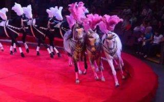 Кони на манеже