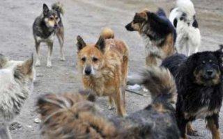 На отлов бродячих собак чиновникам дали сутки