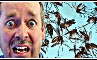 Россиян предупредили о масштабной угрозе смертельно опасных тропических болезней