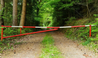 В Саратовской области продлили запрет на посещение лесов