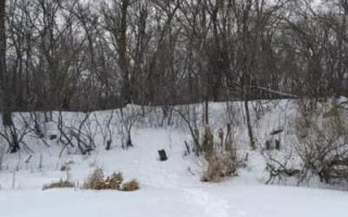 В Пугачевском районе насмерть замерз мужчина
