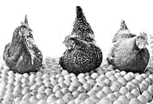 Снесла курочка «Ряба» яичко