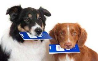 В России введут платную регистрацию домашних питомцев