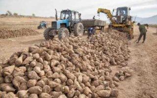 В России рухнул объем производства сельхозпродукции