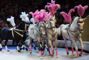 """Как областная дума превратилась в """"цирк с конями"""""""