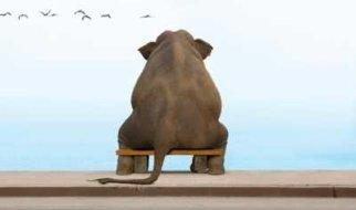 Слон, который спасет Пугачев