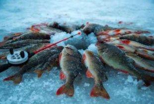 Два пугачевских рыбака заплатят государству за ущерб