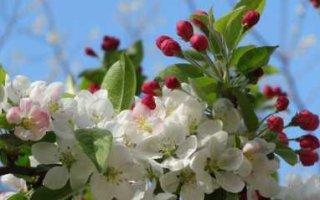 Синоптики пообещали россиянам лето вместо весны
