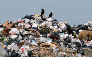Глава Росприроднадзора заявила о полном провале мусорной реформы
