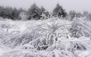 В Пугачеве температура воздуха опускалась до – 28 градусов