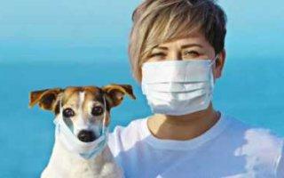 Владельцы собак переносят covid-19 бессимптомно