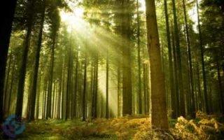 Леса в России станут частными