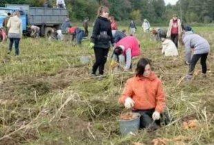 Минсельхоз привлечет к уборке урожая студентов и зэков