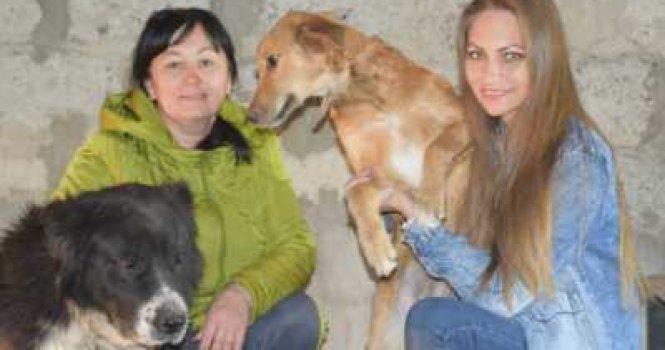 Энтузиасты хотят создать в Пугачеве приют для бездомных животных