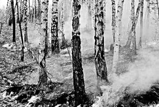 Обугленные деревья лесов наших