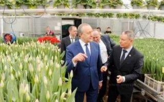 Правительство области закупит цветов на полмиллиона рублей
