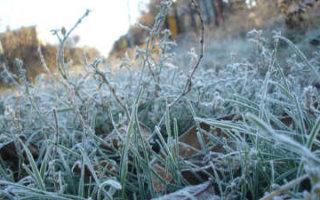 В Гидрометцентре предупредили о заморозках