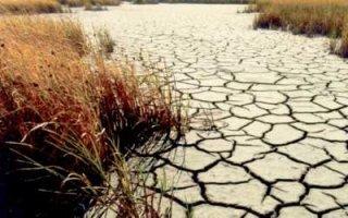 В области началась засуха