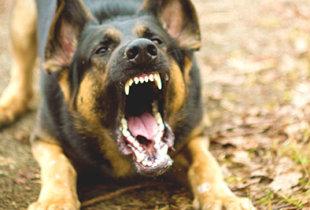 Собачье дело для чиновника