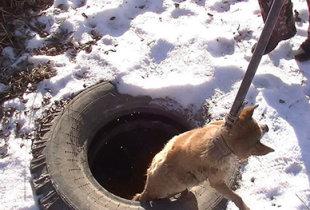 В Пугачеве спасатели достали из колодца пса
