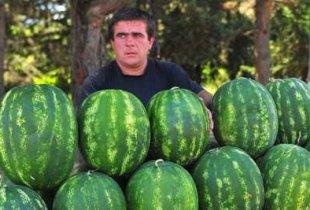 В Пугачеве у торговца арбузами украли сумку с деньгами