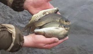 В Краснопартизанском районе неизвестные уничтожили десять тонн рыбы
