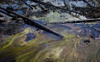 Разлив нефти под Перелюбом