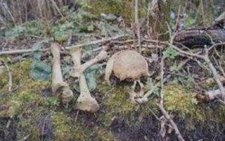 У поселка Горный обнаружен скелет человека