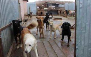 Есть деньги на собак, а на сельские школы — ни копейки