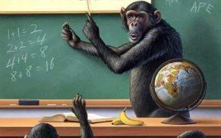 Деньги, обезьяны и… проституция