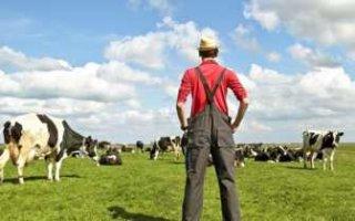 За десять лет количество фермеров в области сократилось в два раза